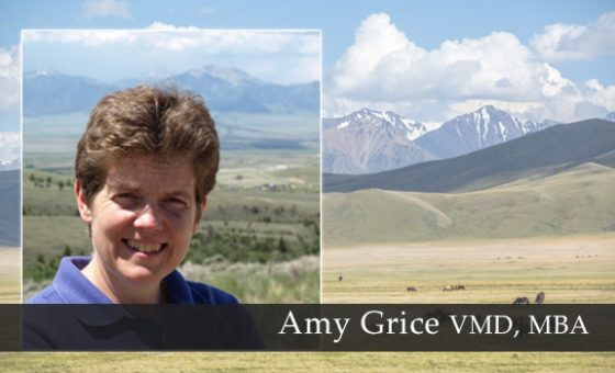 Amy Grice VMD, MBA
